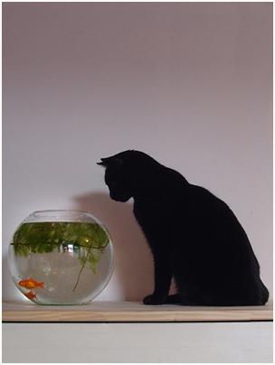 poissons à éviter
