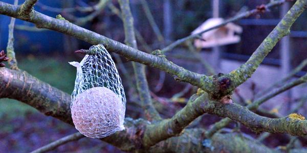 nourrir oiseau hiver