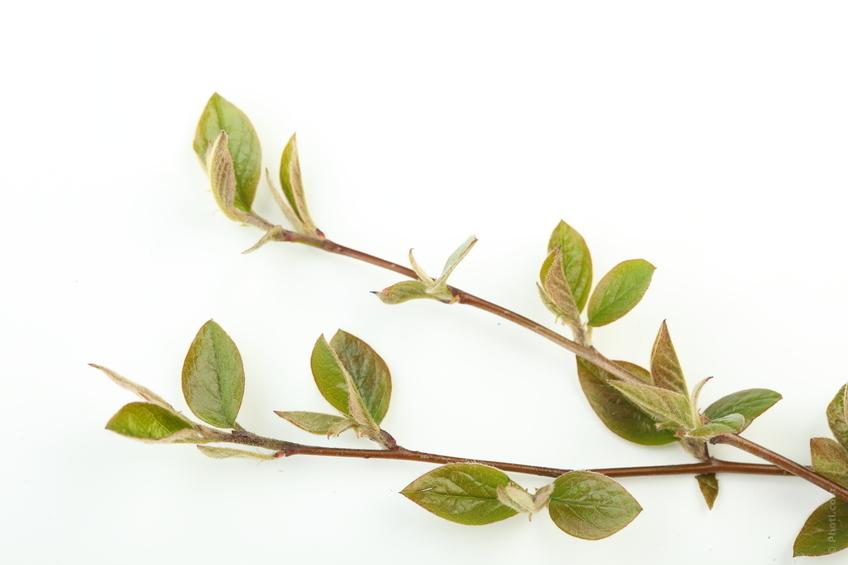 branches végétaux