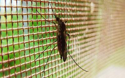 Se protéger des moustiques sans insecticide