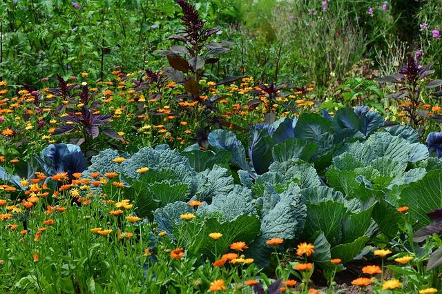Mes erreurs en design de jardin permaculturel